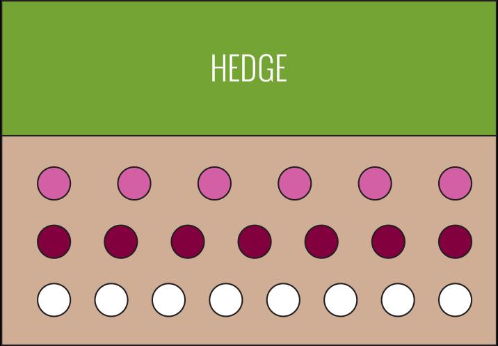 Backyard Garden Diagram