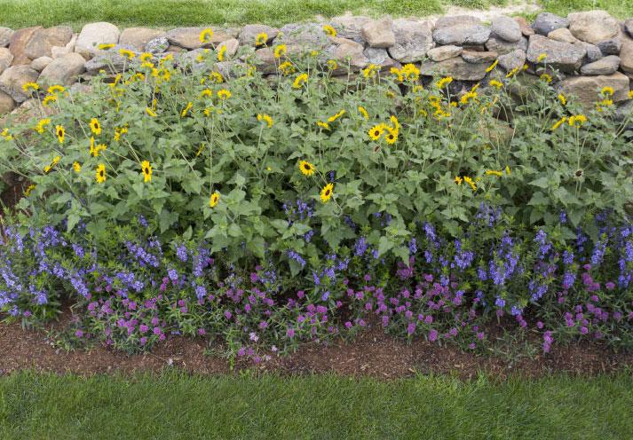 Cut Flower Garden Photo