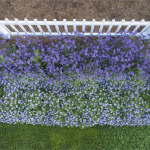Picket Fence Garden Photo