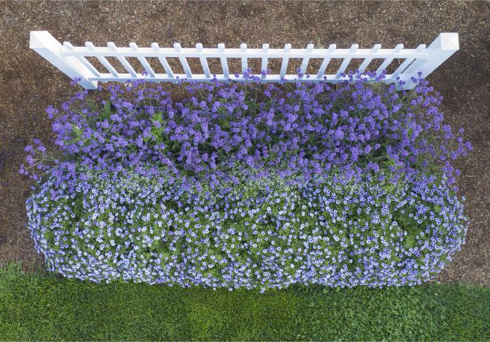Picket Fence Garden Photo