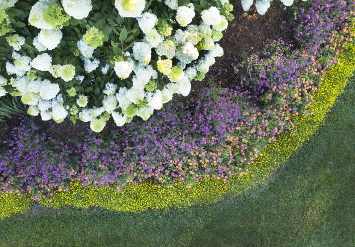 Pollinator Arch Garden Photo