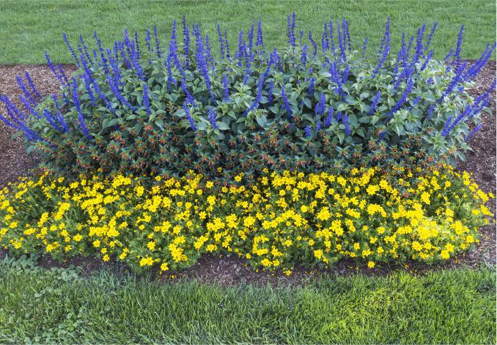 Pollinator Deck Garden Photo
